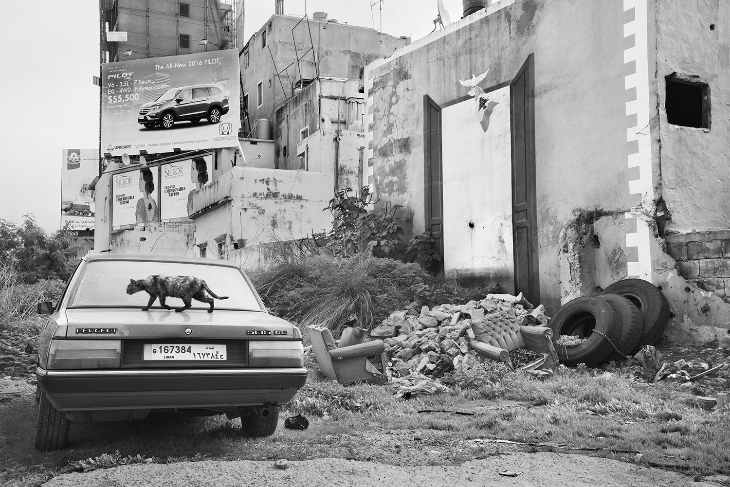 Manal Abu-Shaheen<br>Untitled (Cat). Beirut, Lebanon<br>2016<br>Archival fiber inkjet print mounted on aluminum<br>16 x 24 in