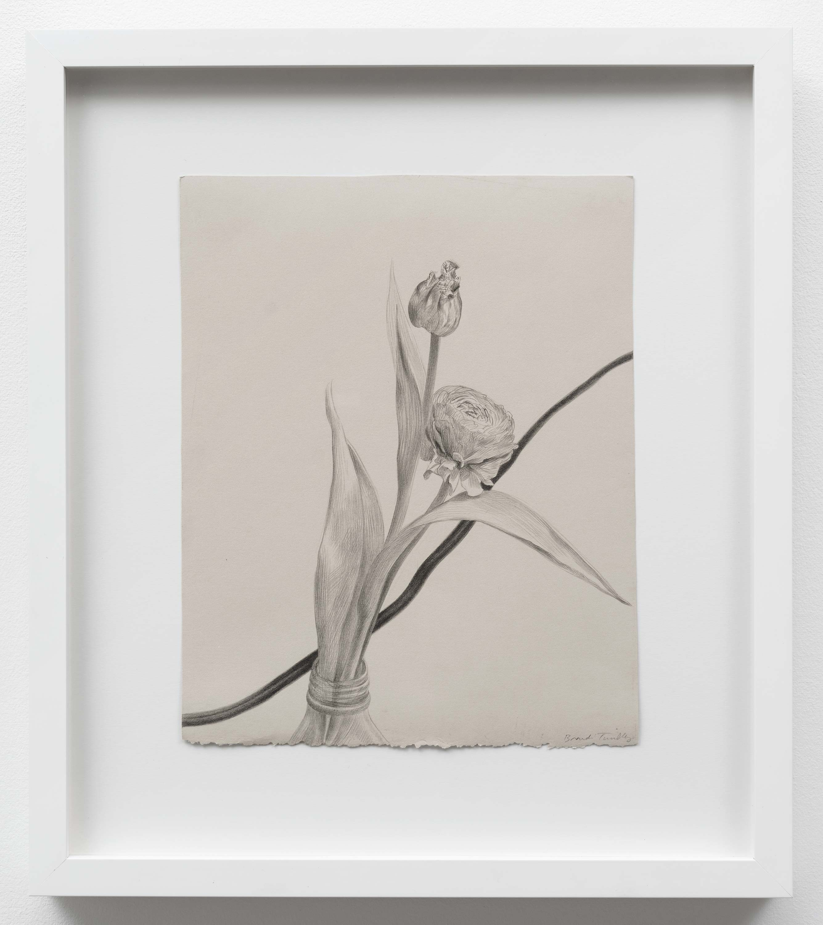 Brandi Twilley<br>Flowers with Cord I<br>2014<br>Graphite on gray paper<br>9 x 11.25 (23 x 26.5 cm)